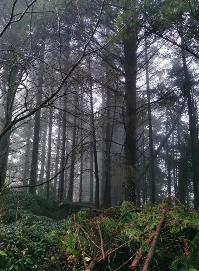 Through The Trees - trees