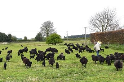 Dad feeding his flock - Image Courtesy of Rachel Atkinson www.mylifeinknitwear.com . Loop,London. www.loopknitlounge.com