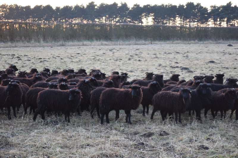 The flock! Image copyright of Rachel Atkinson